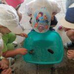 дети знакомятся со свойствами воды